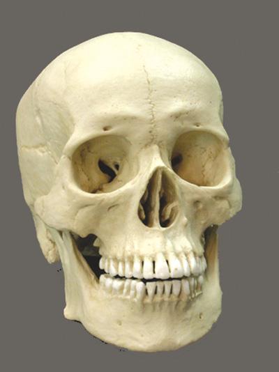 Biological Profiling Of The Human Skeleton
