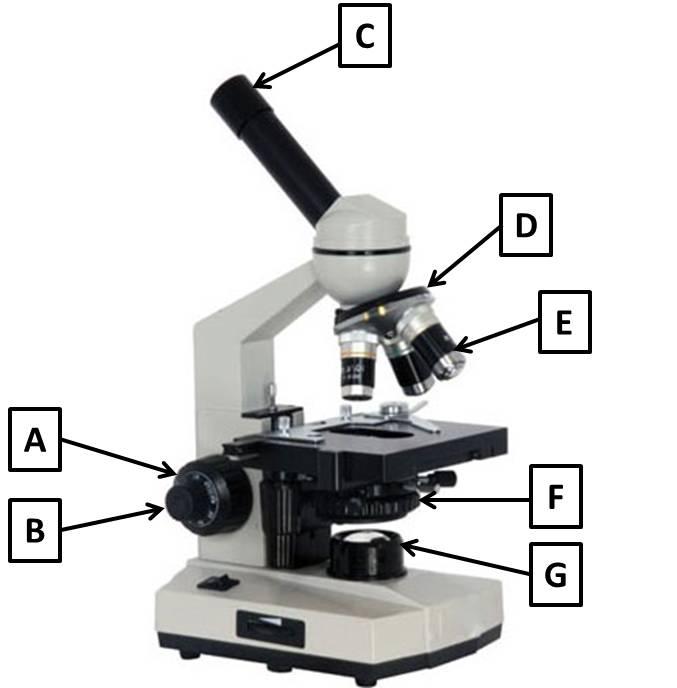 microscope parts quiz marylandbertyl. Black Bedroom Furniture Sets. Home Design Ideas