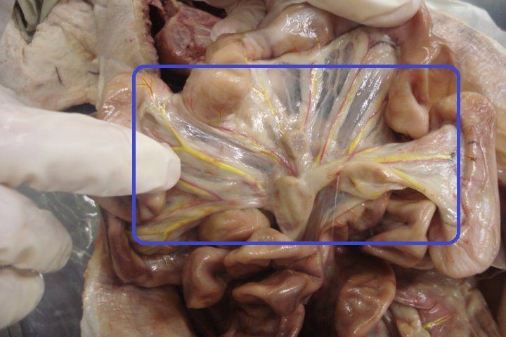 AHS 202l Digestive System - ProProfs Quiz