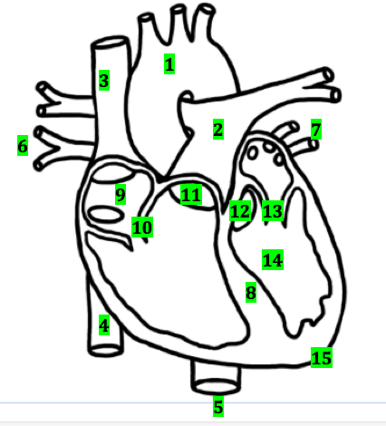 Heart labeling quiz proprofs quiz blood vessel number 1 is the ccuart Gallery