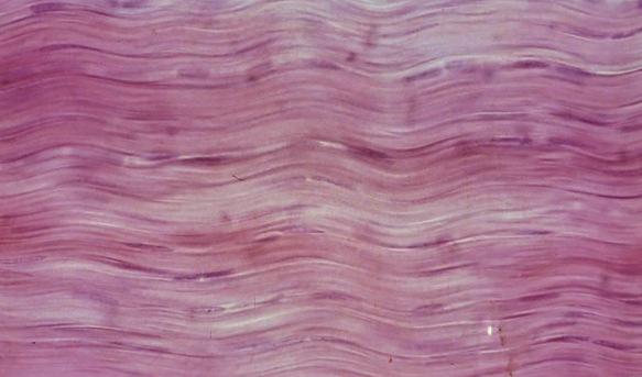 Identify Tissues Quiz - ProProfs Quiz