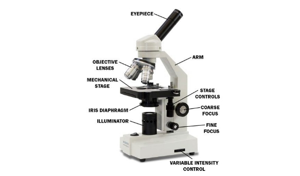 Ultimate quiz on microscope parts and functions proprofs quiz coarse adjustment knob ccuart