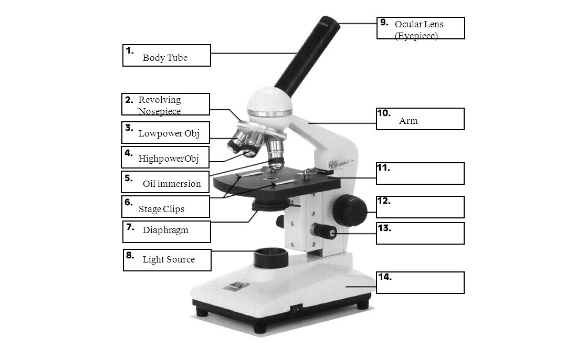 Ultimate quiz on microscope parts and functions proprofs quiz revolving nosepiece ccuart Images