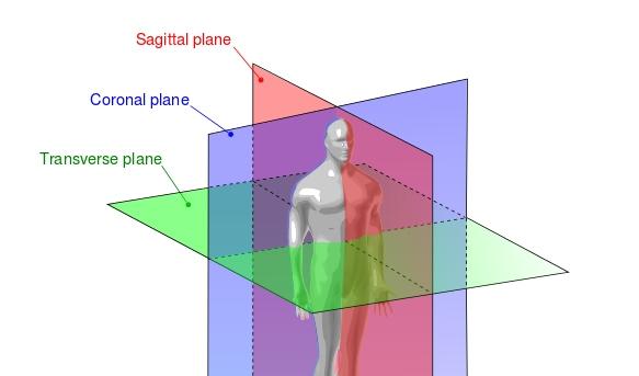 Anatomical Planes Body Cavities Quiz Proprofs Quiz