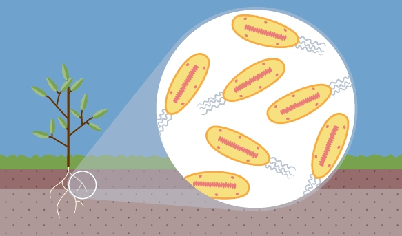 What Are Nitrogen Fixing Bacteria >> Where Are Nitrogen Fixing Bacteria Found Proprofs
