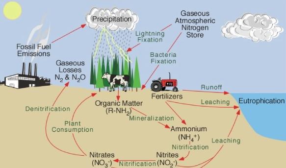 The Nitrogen Cycle Quiz Proprofs Quiz