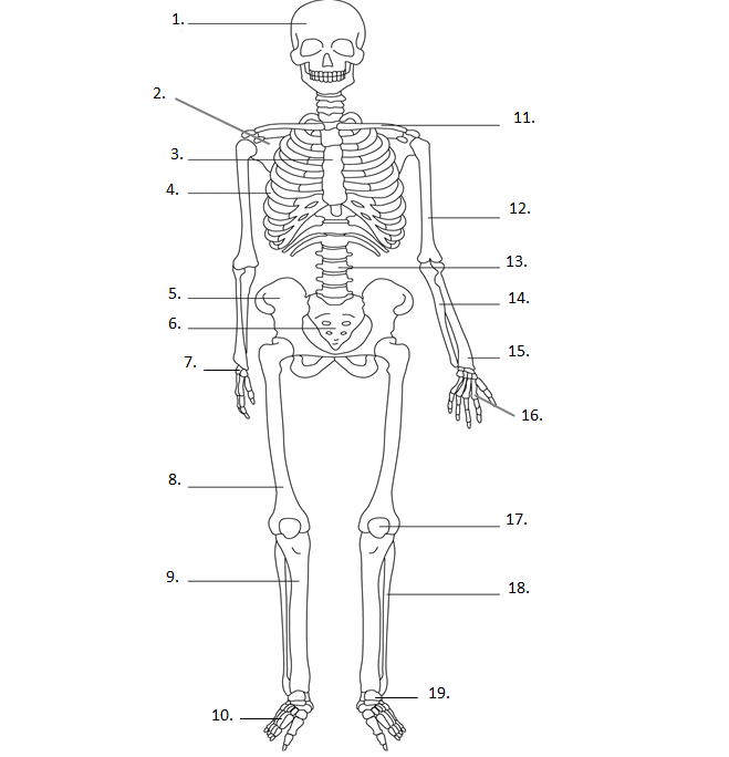 btec level 2 sport skeletal system