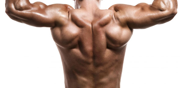 which is the strongest muscle in the human body? - proprofs, Muscles