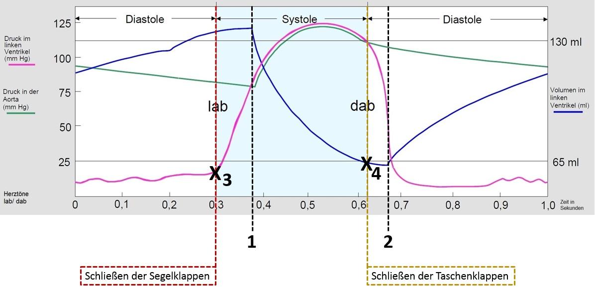Gemütlich Markierte Diagramm Des Herzens Bilder - Menschliche ...