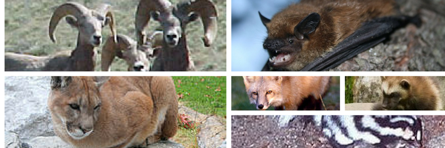 Wild animals of Oregon. Take quiz to test your knowledge.