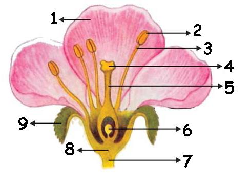 Bagian Bunga Yang Ditunjuk Oleh No 1 3 4 9 Adalah Proprofs