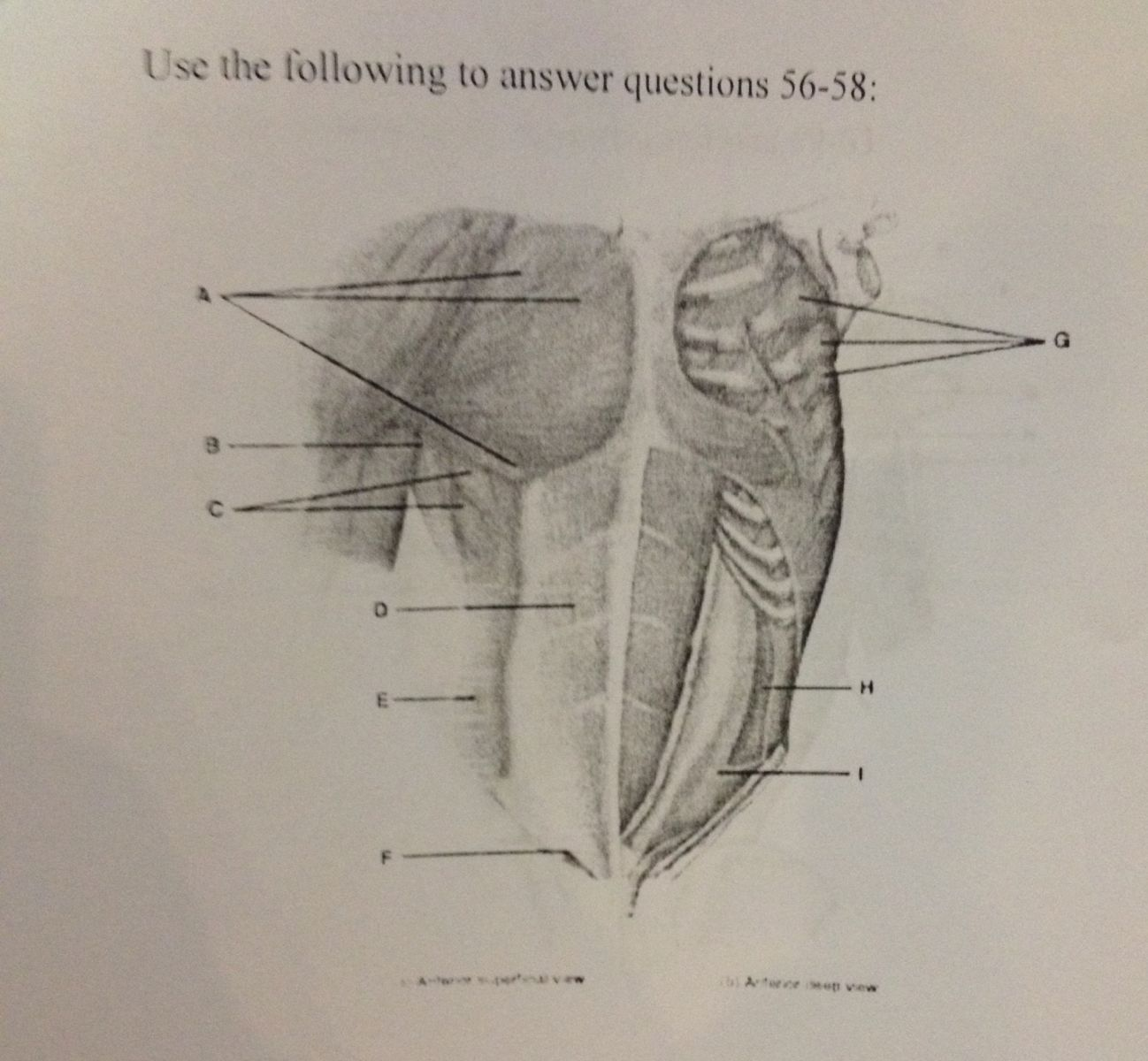 Großzügig Anatomy And Physiology Exam 3 Answers Fotos - Menschliche ...