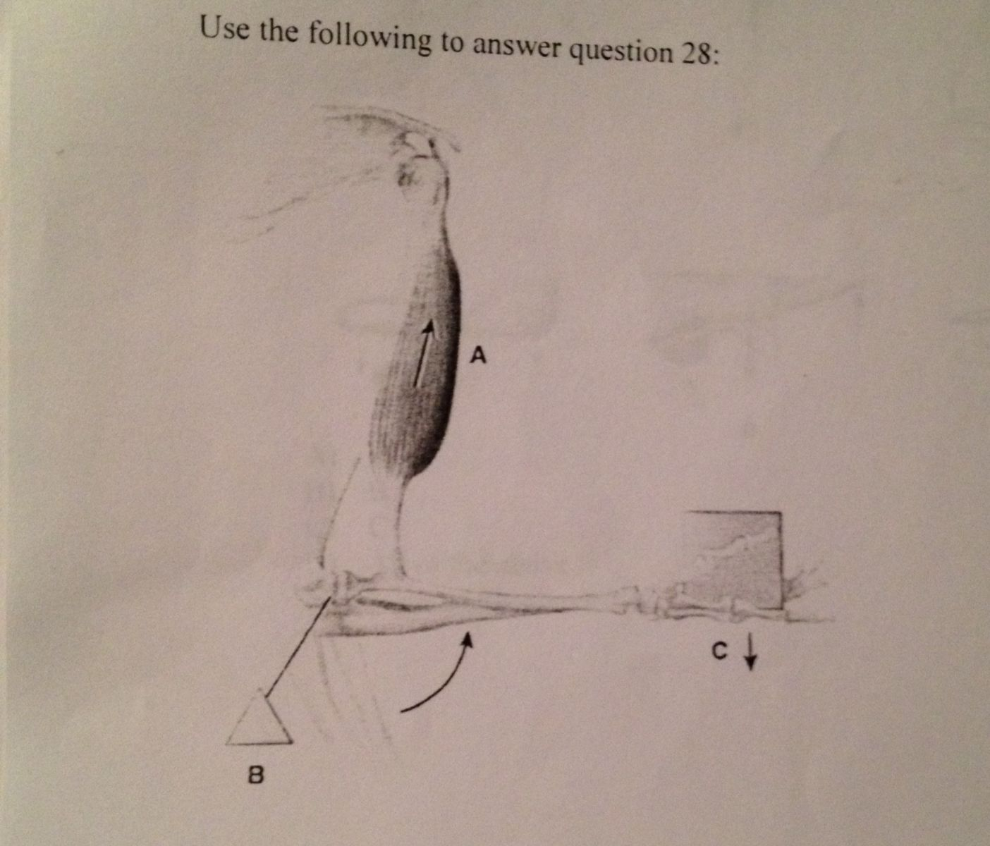 Anatomy And Physiology Exam 3 Part 1 - ProProfs Quiz