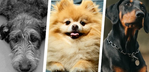 What Dog Breed Does Your Personality Match With