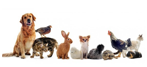 What Is The Best Pet For You?