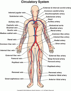 Do You Understand Human Blood Circulatory System?