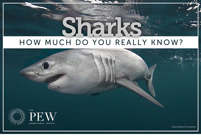 Test Your Shark Smarts Quiz