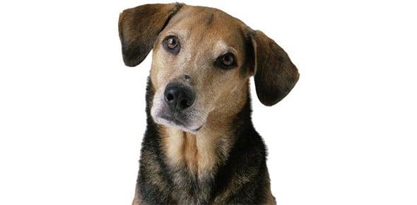 dog Quizzes & Trivia