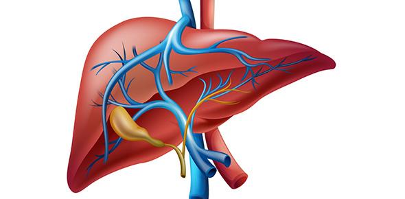 Liver Anatomy Pt 1 - ProProfs Quiz