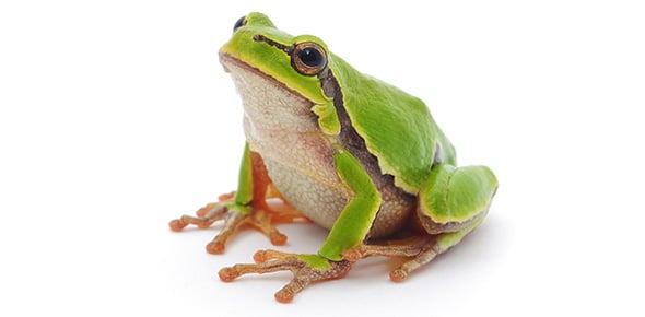 amphibian Quizzes & Trivia