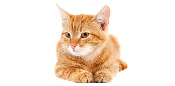 cat Quizzes & Trivia