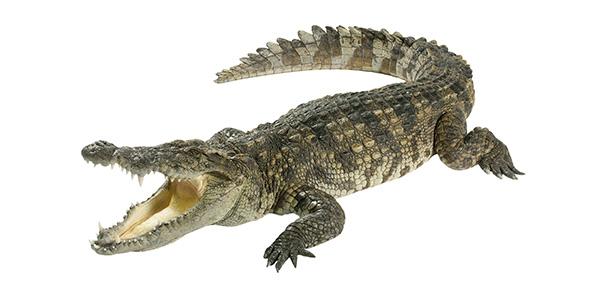 Rider crocodile tears pdf alex