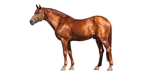 Test Your Knowledge On Horse Anatomy - ProProfs Quiz