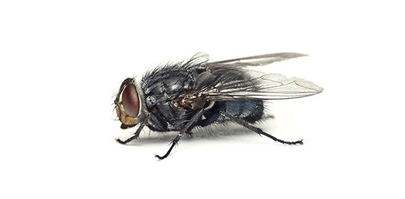 Insect Quizzes, Insect Trivia, Insect Questions