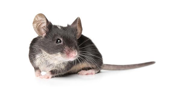 mouse Quizzes & Trivia