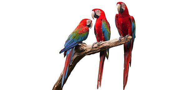 parrot Quizzes & Trivia