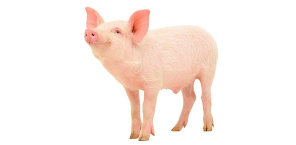 reasons for the collapse of the bay of pig Professionalism/irving janis and groupthink janis attributed the causes of groupthink in the bay of pigs to as long as the group does not fall into the.