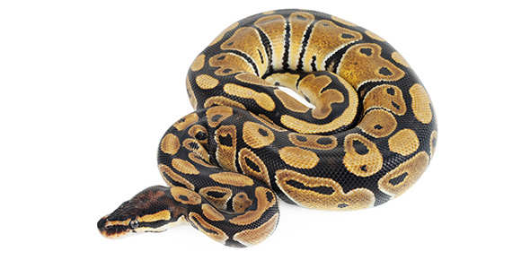 python Quizzes & Trivia