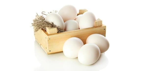 egg Quizzes & Trivia
