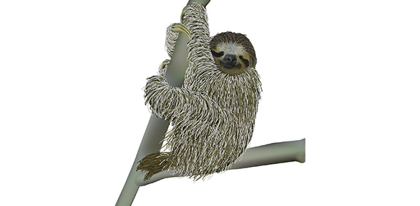 Sloth Quizzes, Sloth Trivia, Sloth Questions