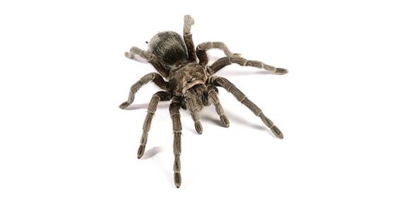 spider Quizzes & Trivia