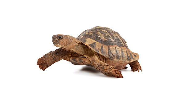 turtle Quizzes & Trivia