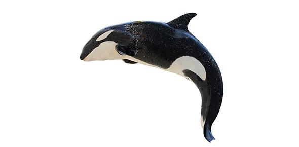 whale Quizzes & Trivia