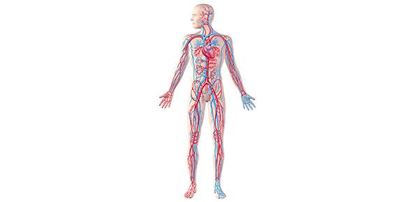 human biology Quizzes & Trivia