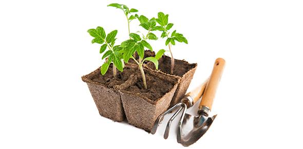 gardening Quizzes & Trivia