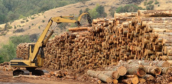 forestry Quizzes & Trivia