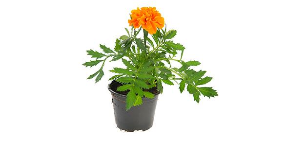 plant Quizzes & Trivia