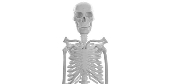 skeleton Quizzes & Trivia