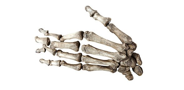 The Bones Of The Hand And Arm - ProProfs Quiz