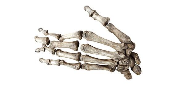 bone Quizzes & Trivia