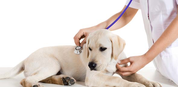 veterinary Quizzes & Trivia