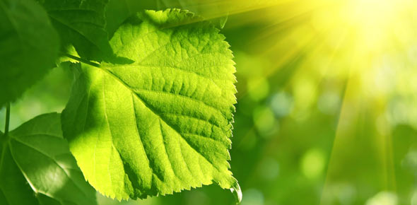 photosynthesis Quizzes & Trivia
