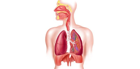 Respiratory practice exam proprofs quiz respiratory quizzes trivia ccuart Image collections