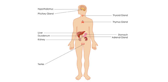 Endocrine System (Location And Function) - ProProfs Quiz