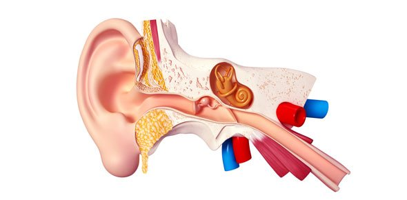 Ear diagram quiz proprofs quiz ear quizzes trivia ccuart Choice Image