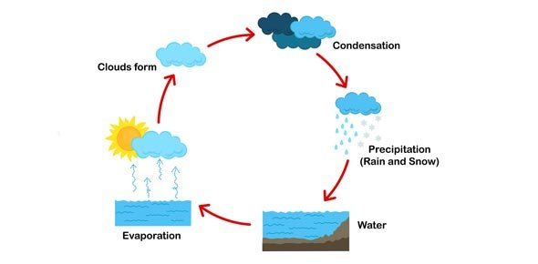 m3 science quiz- understanding the water cycle